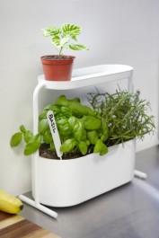 Metalowa doniczka do ziół i roślin Giardino